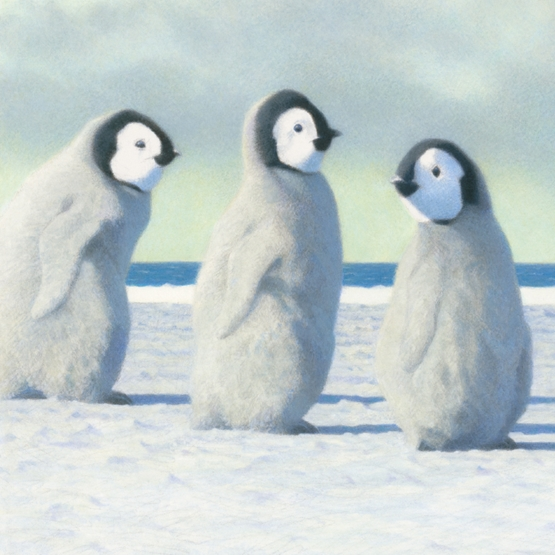 Xmas Charity Penguin Chicks Large Sqr Pack of 5 Cards